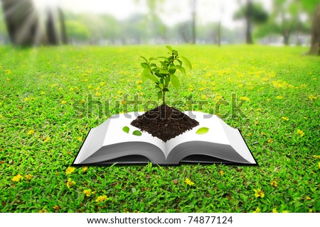 Seedlings based on the book. On the ground, green grass in the park. - stock photo