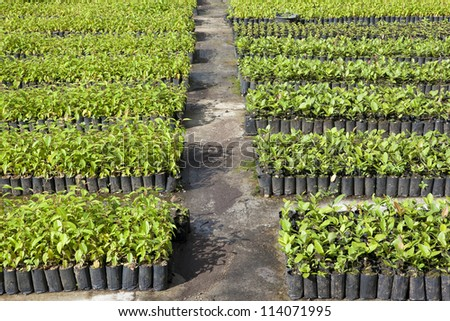 Seedlings flower in a black tray - stock photo