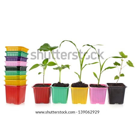 seedlings in a colorful plastic flowerpot  isolated on white background - stock photo