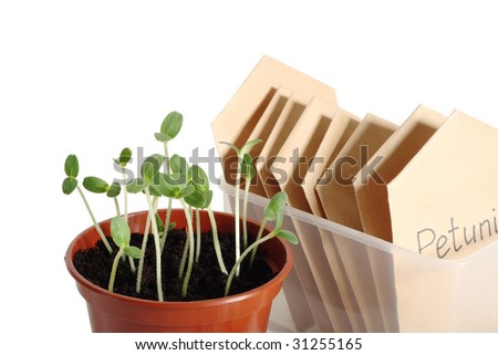 Seedlings in pot and seed packets, close up, isolated on white background - stock photo