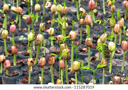 Seedlings in pots - stock photo