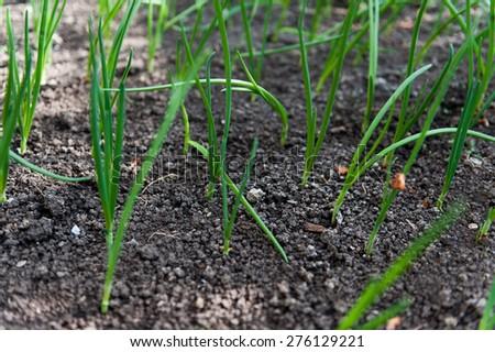 Seedlings in the spring - stock photo