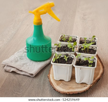 Seedlings of flowers in pots and spray on a wooden table