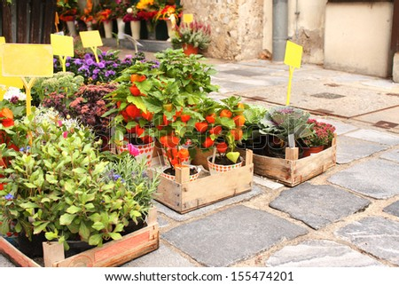 Seedlings of garden decorative plants on ancient paving stone - stock photo