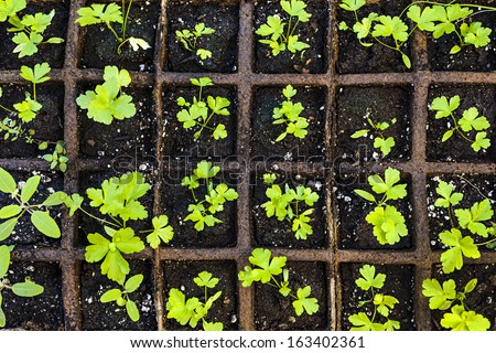 Seedlings of herbs and vegetables growing in grid starter tray - stock photo
