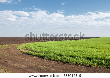 Seedlings of winter on the field. grass on the field. Spring, the winter wheat turning green. agricultural background of a field with green seedling rows. Young winter wheat on the field - stock photo