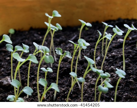 Seedlings on ground with light