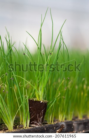 seedlings potted in peat tray - stock photo