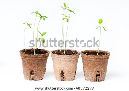 Seedlings spring - stock photo