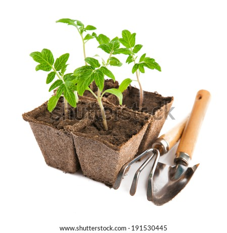 Seedlings tomato with garden tools. Isolated on white background - stock photo