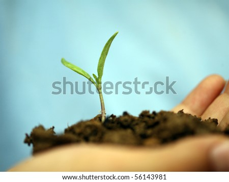 seedlings were held for additional time to grow - stock photo