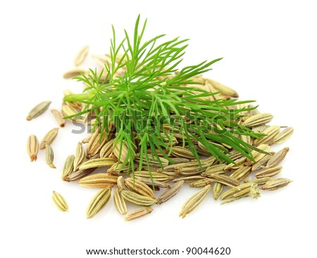 Seeds and a fennel branch on a white background - stock photo