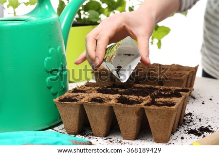 Seeds, gardener prepares the seedlings.Gardener sows seeds are watered and cares sown into pots of peat  - stock photo