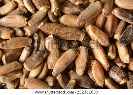 Seeds of a milk thistle. Background