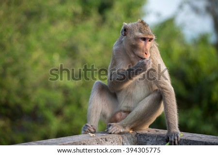 select focus with depth of field monkeys relaxing at Khao Sam Muk. Chonburi, Thailand travel destinations