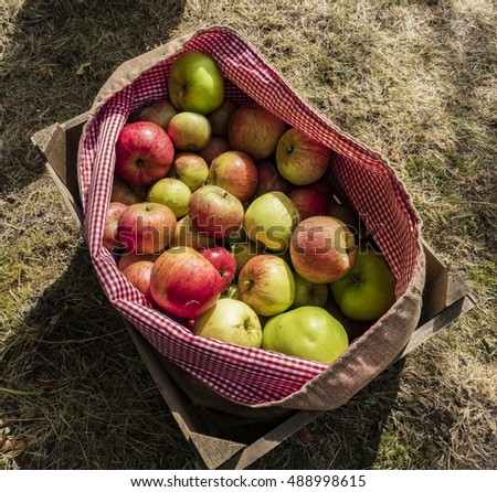 Selection of apples in a bag