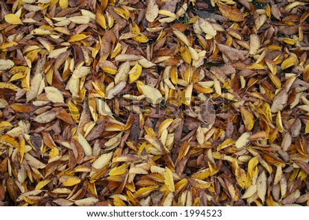 selection of different colour leaves shed by trees in autumn