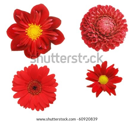 Selection of four red flowers isolated on white - stock photo
