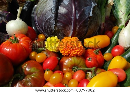 Selection of fresh colorful summer vegetables as a background - stock photo