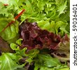 Selection of fresh mixed green salad leaves - stock photo