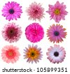 Selection of Pink White Flowers Isolated on White. Nine Daisy Flowers - stock photo