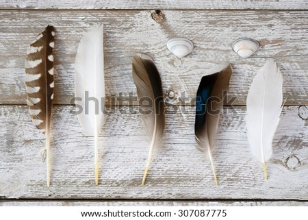 selection of various bird feathers on a white leaved painted wooden shelves background