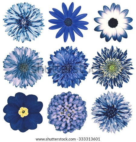 Selection of Various Flowers in Blue Vintage Retro Style Isolated on White Background. Daisy, Chrystanthemum, Cornflower, Dahlia, Iberis, Primrose, Gerbera, Rose. - stock photo