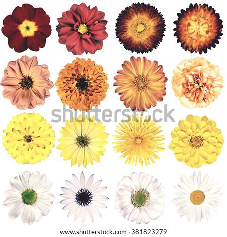 Selection of Various Flowers in Vintage Retro Style Isolated on White Background. Collection Pink, Blue, Yellow, Red, Orange, Daisy, Chrysanthemum, Cornflower, Dahlia, Primrose, Gerbera, Rose - stock photo