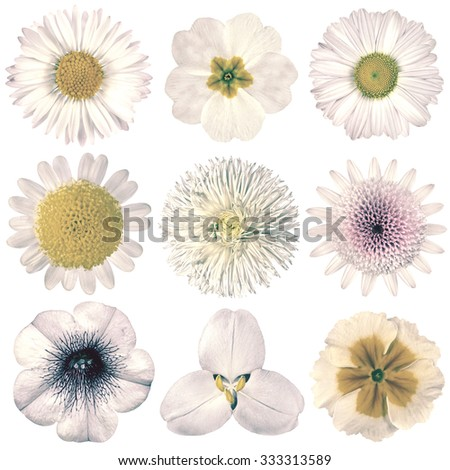 Selection of Various Flowers in White Vintage Retro Style Isolated on White Background. Daisy, Chrystanthemum, Cornflower, Dahlia, Iberis, Primrose, Gerbera, Rose. - stock photo