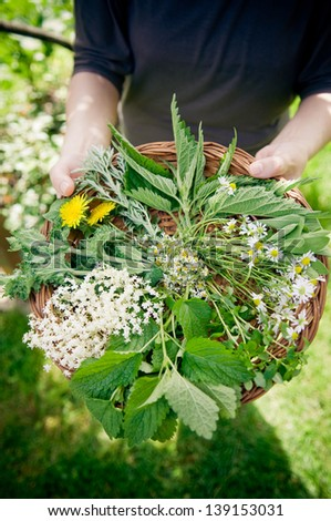 Selection of wild herbs in small basket. - stock photo