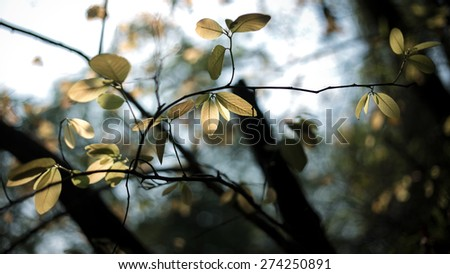 Selective Focus branch with autumn leaves against the sunlight - stock photo