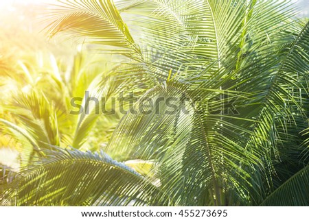 Selective focus coconut tree jungle with effect light added. - stock photo