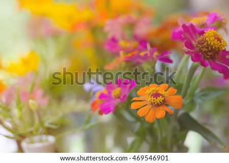 Selective focus color of flowers in garden at evening time,copy space.