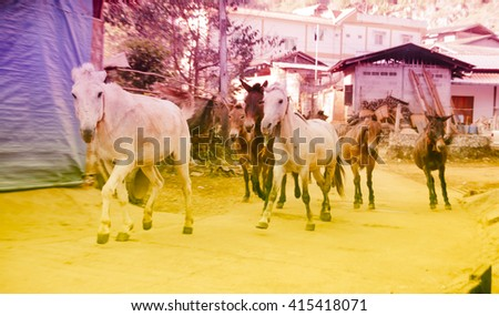 selective focus Herd arabian horses  runnig on village road with pastel style - stock photo