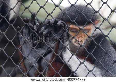 selective focus monkey in cage