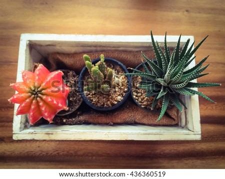 selective focus of cactus in brown potted on wood table, invert color - stock photo