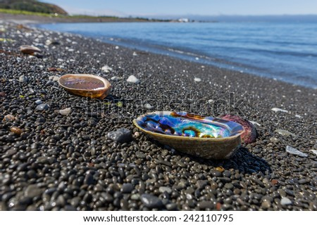 Selective focus of colorful shells on a beach - stock photo