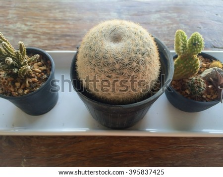 selective focus of small cactus in vase on white plate, interior house plant - stock photo