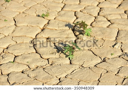selective focus of small trees grow on cracked clay texture