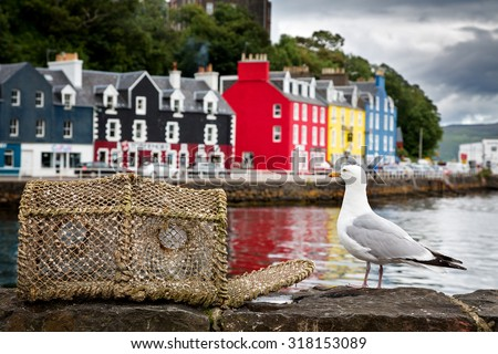Selective focus on a seagull on the quayside, with the colourful village of Tobermory in the background. Isle of Mull, Scotland, UK - stock photo