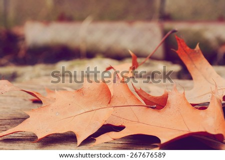 Selective focus on autumn leaves. - stock photo