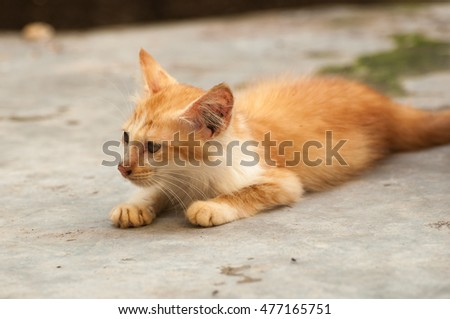 Selective focus on face of yellow color kitten cat (stray cat) lying on the floor, blurred background, copy space