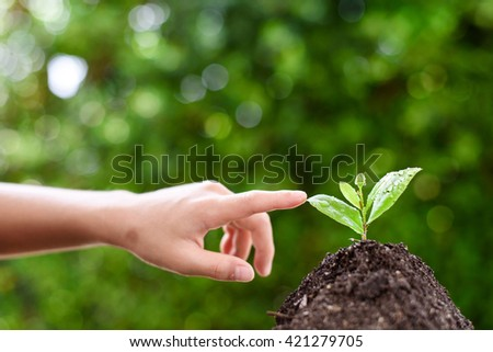 Selective focus on Little seedling in black soil point by child finger. Earth day concept. - stock photo