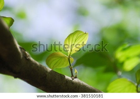selective focus on new growing leaves on tree in spring