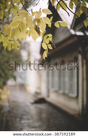 selective focus on the yellow leafs, great DOF 1,2 - stock photo