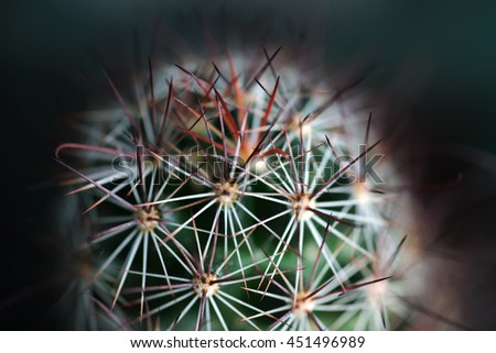 Selective Soft Focus of Cactus Thorn Background Texture - stock photo