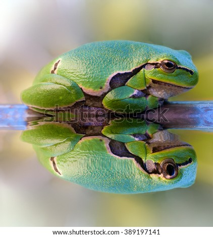 self-reflection that bounces perfectly from the frog