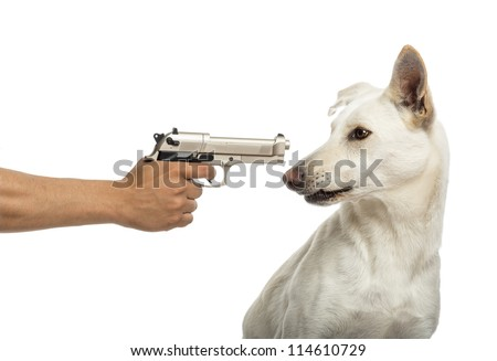 Semi-automatic pistol pointed at Crossbreed dog against white background - stock photo