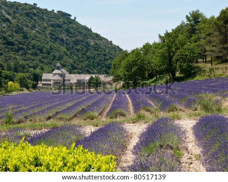 Senanque Abbey, Provence, France -  with lavender flowers in bloom