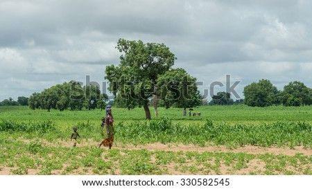 Senegal - August 19: A young african woman walks across the field carrying one child on her back with another closely following her behind. August 19,2015 in a rural areas of Senegal - stock photo